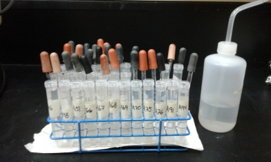 Sample tubes during processing